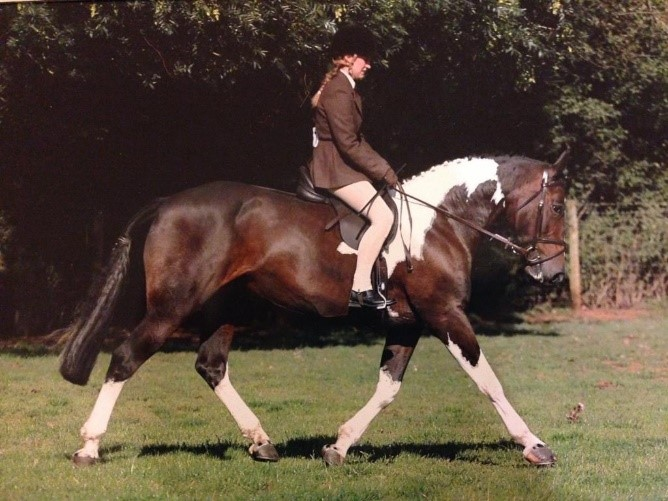 Bette is the lead horse at Turpins Lodge.  Bette also enjoys Cross Country and Show Jumping